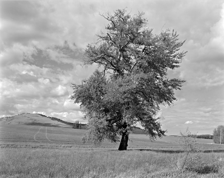 Robert Adams - Tree Line