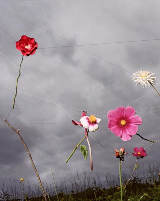 Collier Schorr - Blumen