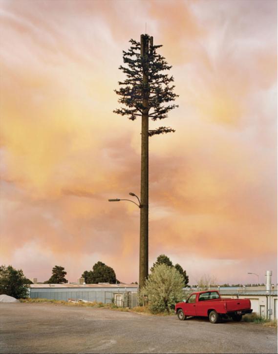 Robert Voit - New Trees